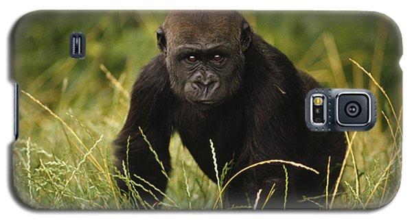Western Lowland Gorilla Juvenile Galaxy S5 Case by Gerry Ellis