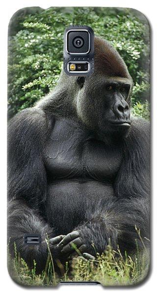 Western Lowland Gorilla Male Galaxy S5 Case by Konrad Wothe