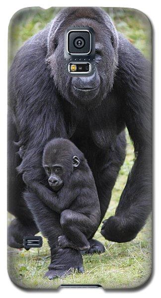 Western Lowland Gorilla Walking Galaxy S5 Case by Duncan Usher
