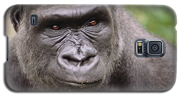 Western Lowland Gorilla Young Male Galaxy S5 Case by Gerry Ellis