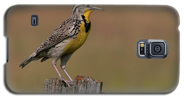 Western Meadowlark.. Galaxy S5 Case by Nina Stavlund