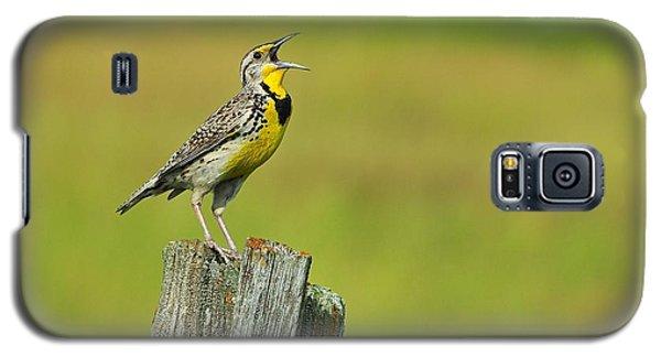 Western Meadowlark Galaxy S5 Case by Tony Beck