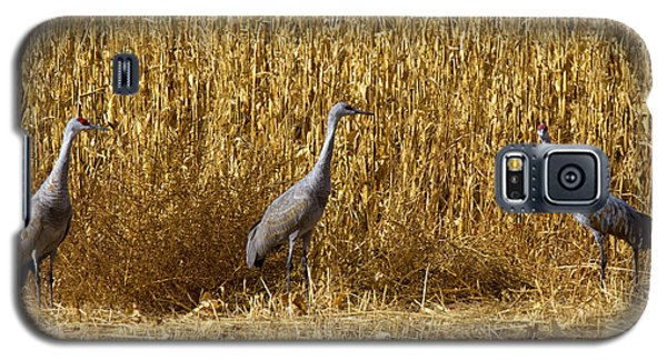 Where Is The Corn Galaxy S5 Case by Mike  Dawson