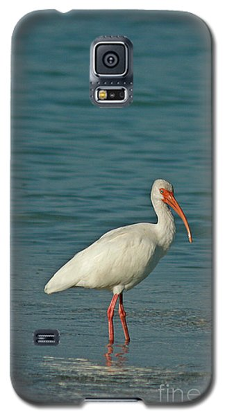 White Ibis Galaxy S5 Case by Cindi Ressler
