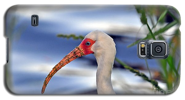 Intriguing Ibis Galaxy S5 Case by Al Powell Photography USA