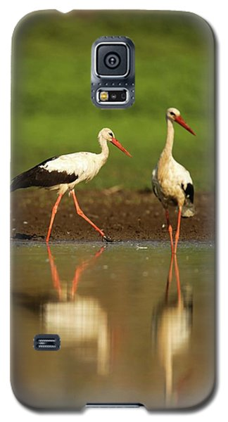 White Stork (ciconia Ciconia) Galaxy S5 Case by Photostock-israel