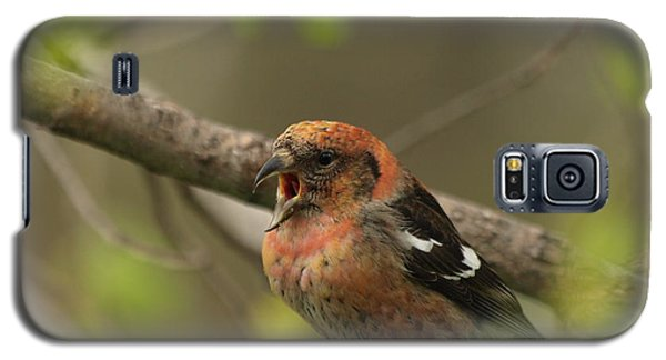 White-winged Crossbill Galaxy S5 Case by James Peterson