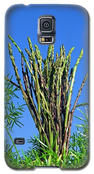 Wild Asparagus (asparagus Acutifolius Galaxy S5 Case by Nico Tondini