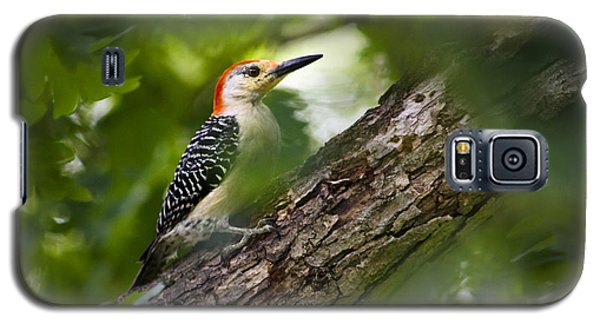 Red Bellied Woodpecker Galaxy S5 Case by Christina Rollo