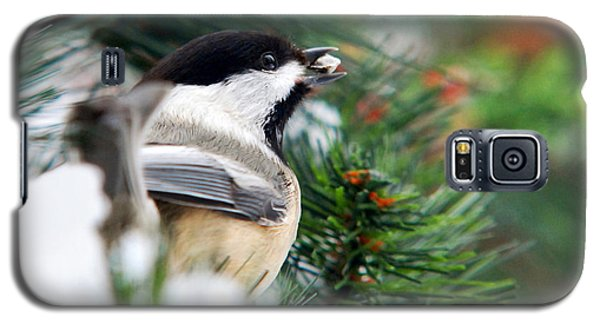 Winter Chickadee With Seed Galaxy S5 Case by Christina Rollo