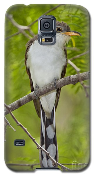 Yellow-billed Cuckoo Galaxy S5 Case by Anthony Mercieca