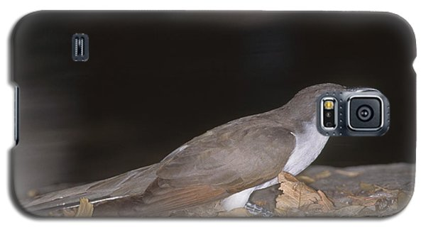 Yellow-billed Cuckoo Galaxy S5 Case by Gregory G. Dimijian, M.D.