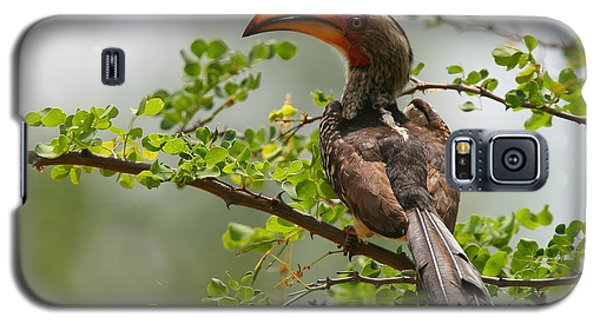 Yellow-billed Hornbill Galaxy S5 Case by Bruce J Robinson