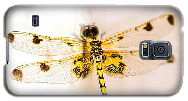 Yellow Dragonfly Pantala Flavescens Galaxy S5 Case by Iris Richardson