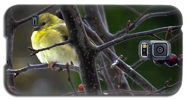 Yellow Finch Galaxy S5 Case by Karen Wiles