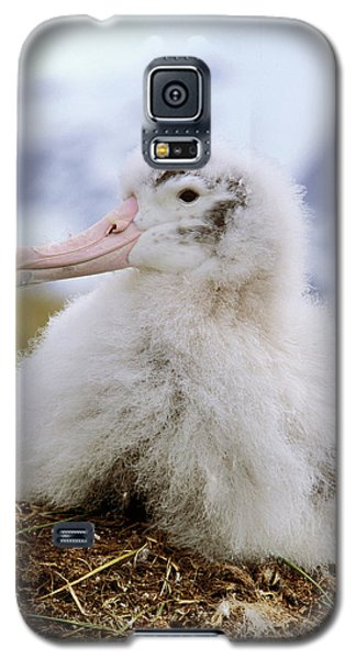 Young Wandering Albatross (diomendea Galaxy S5 Case by Martin Zwick