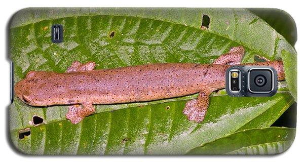 Bolitoglossine Salamander Galaxy S5 Case by Dante Fenolio