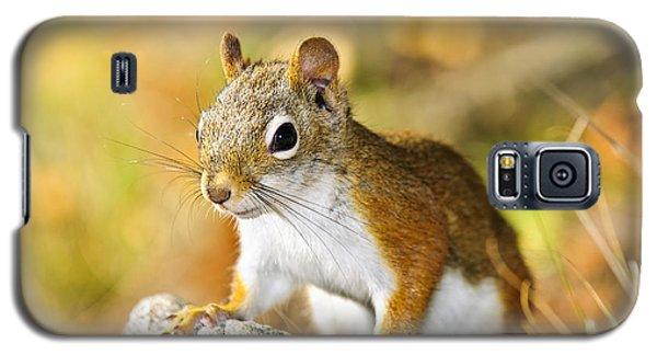 Cute Red Squirrel Closeup Galaxy S5 Case by Elena Elisseeva