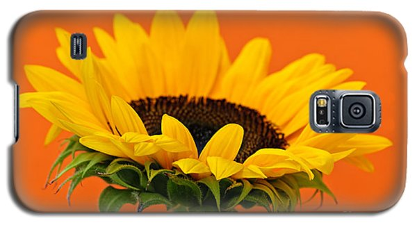 Sunflower Closeup Galaxy S5 Case by Elena Elisseeva