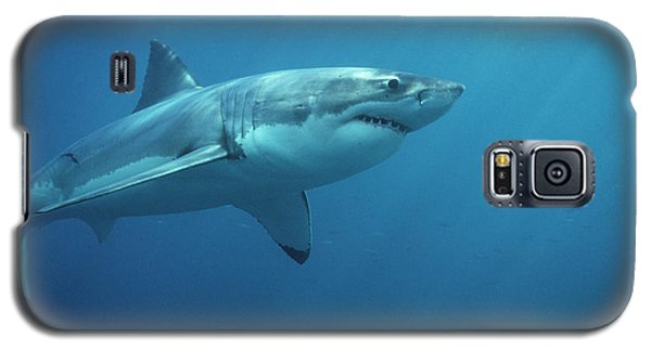 Great White Shark Carcharodon Galaxy S5 Case by Mike Parry