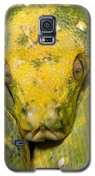 Green Tree Python Galaxy S5 Case by Dante Fenolio