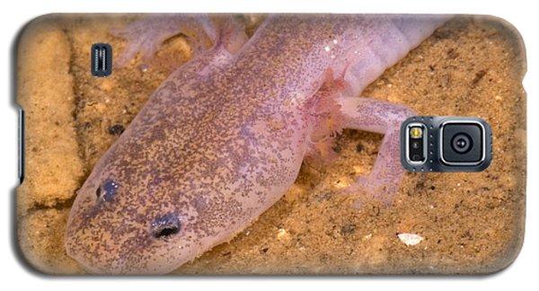 Ozark Blind Cave Salamander Galaxy S5 Case by Dante Fenolio