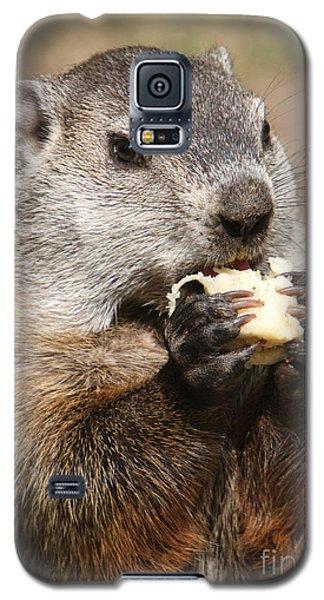 Animal - Woodchuck - Eating Galaxy S5 Case by Paul Ward