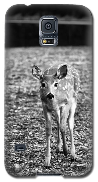 Bambi In Black And White Galaxy S5 Case by Sebastian Musial