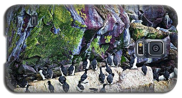 Birds At Cape St. Mary's Bird Sanctuary In Newfoundland Galaxy S5 Case by Elena Elisseeva