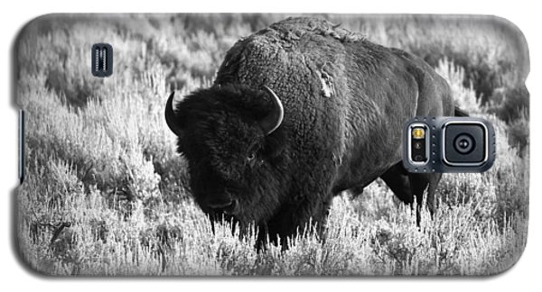 Bison In Black And White Galaxy S5 Case by Sebastian Musial