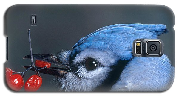 Blue Jay Galaxy S5 Case by Photo Researchers, Inc.