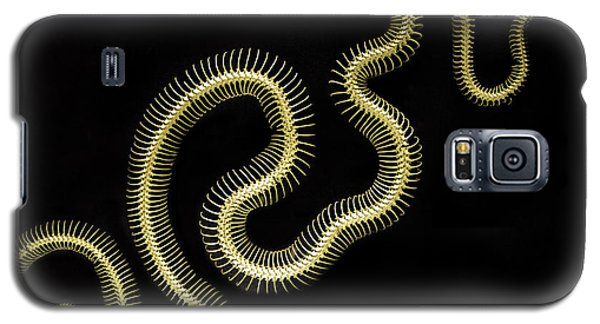 Boa Constrictor Skeleton Galaxy S5 Case by Bob Christopher