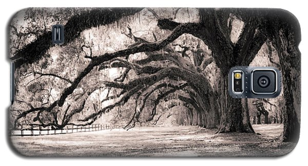 Tree Galaxy S5 Cases - Boone Hall Plantation Live Oaks Galaxy S5 Case by Dustin K Ryan