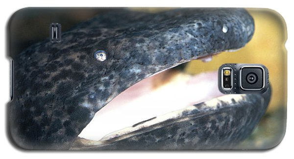 Chinese Giant Salamander Galaxy S5 Case by Dante Fenolio