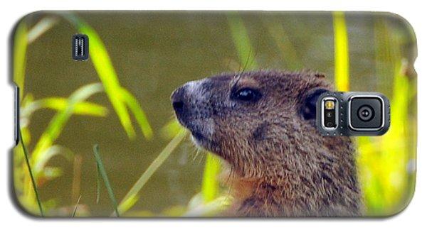 Chucky Woodchuck Galaxy S5 Case by Paul Ward