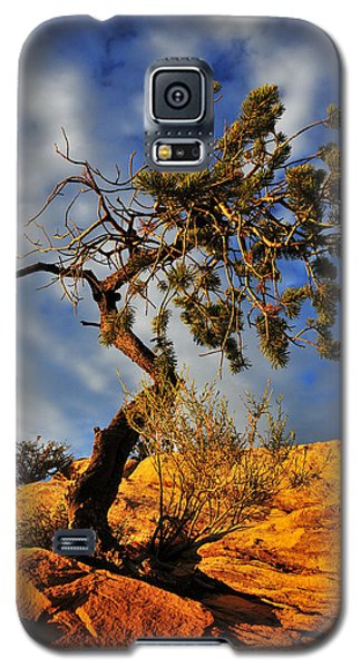 Tree Galaxy S5 Cases - Dusk Dance Galaxy S5 Case by Skip Hunt