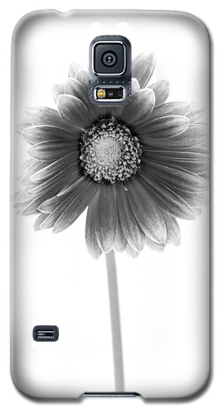 Gerbera In Black And White Galaxy S5 Case by Sebastian Musial