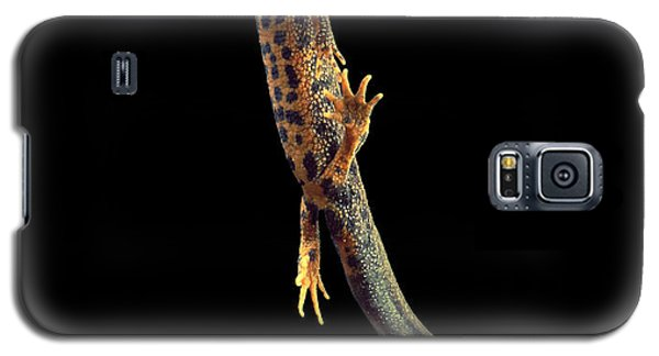 Great Crested Newt Galaxy S5 Case by Andy Harmer