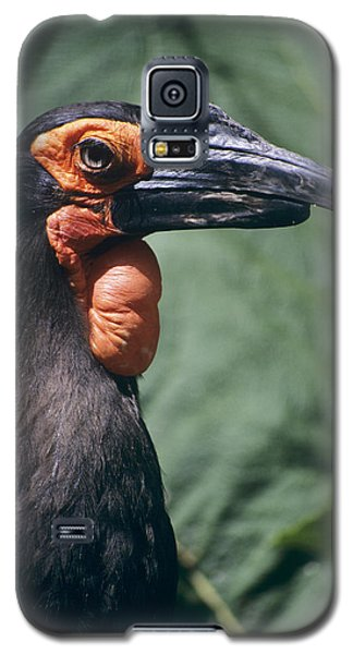 Ground Hornbill Head Galaxy S5 Case by David Aubrey