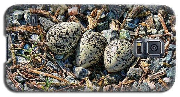 Killdeer Bird Eggs Galaxy S5 Case by Jennie Marie Schell