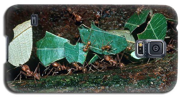 Leafcutter Ants Galaxy S5 Case by Gregory G. Dimijian