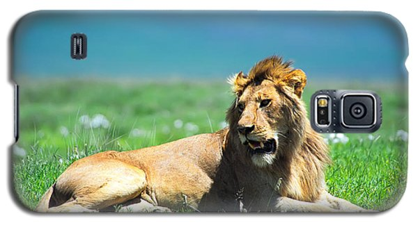 Animals Galaxy S5 Cases - Lion King Galaxy S5 Case by Sebastian Musial
