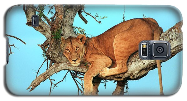Animals Galaxy S5 Cases - Lioness in Africa Galaxy S5 Case by Sebastian Musial