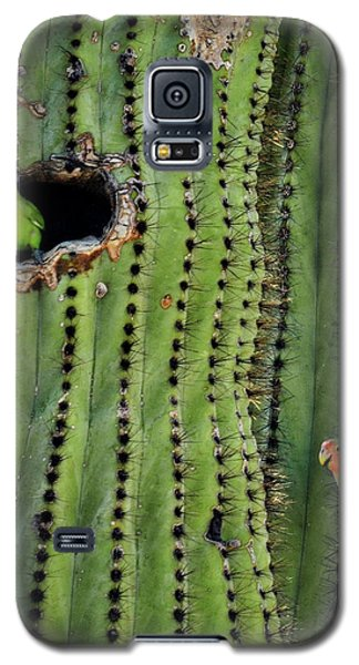 Lovebirds And The Saguaro  Galaxy S5 Case by Saija  Lehtonen
