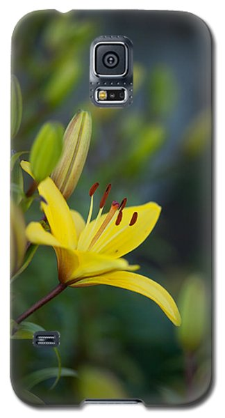 Floral Galaxy S5 Cases - Morning Lily Galaxy S5 Case by Mike Reid
