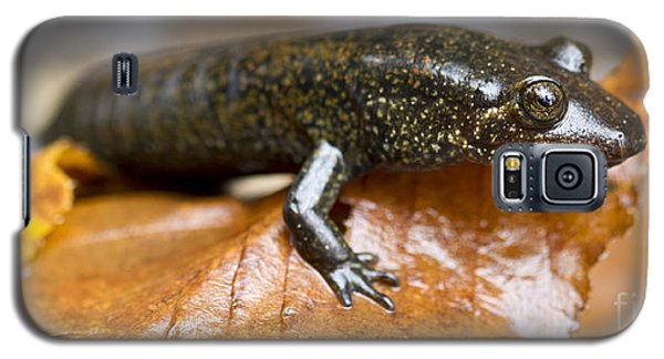 Mountain Dusky Salamander Galaxy S5 Case by Dustin K Ryan