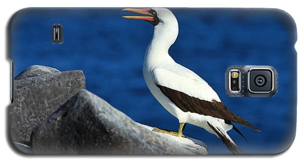 Nazca Booby Galaxy S5 Case by Tony Beck