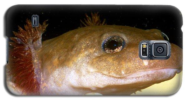 Pacific Giant Salamander Larva Galaxy S5 Case by Dante Fenolio