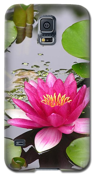 Pink Lily Flower  Galaxy S5 Case by Diane Greco-Lesser
