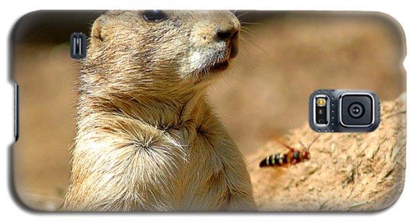Prarie Dog Bee Alert Galaxy S5 Case by LeeAnn McLaneGoetz McLaneGoetzStudioLLCcom